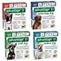 Bayer Advantage II Topical Flea Treatment Dogs from Bayer HealthCare LLC*