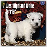 West Highland White Terrier Puppies 2017 Square (Multilingual Edition)