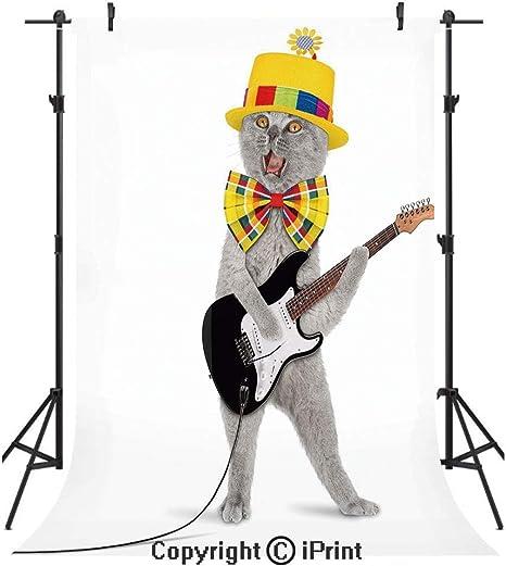 Telón de fondo para fotografía de gato, hipster, músico, gatito ...