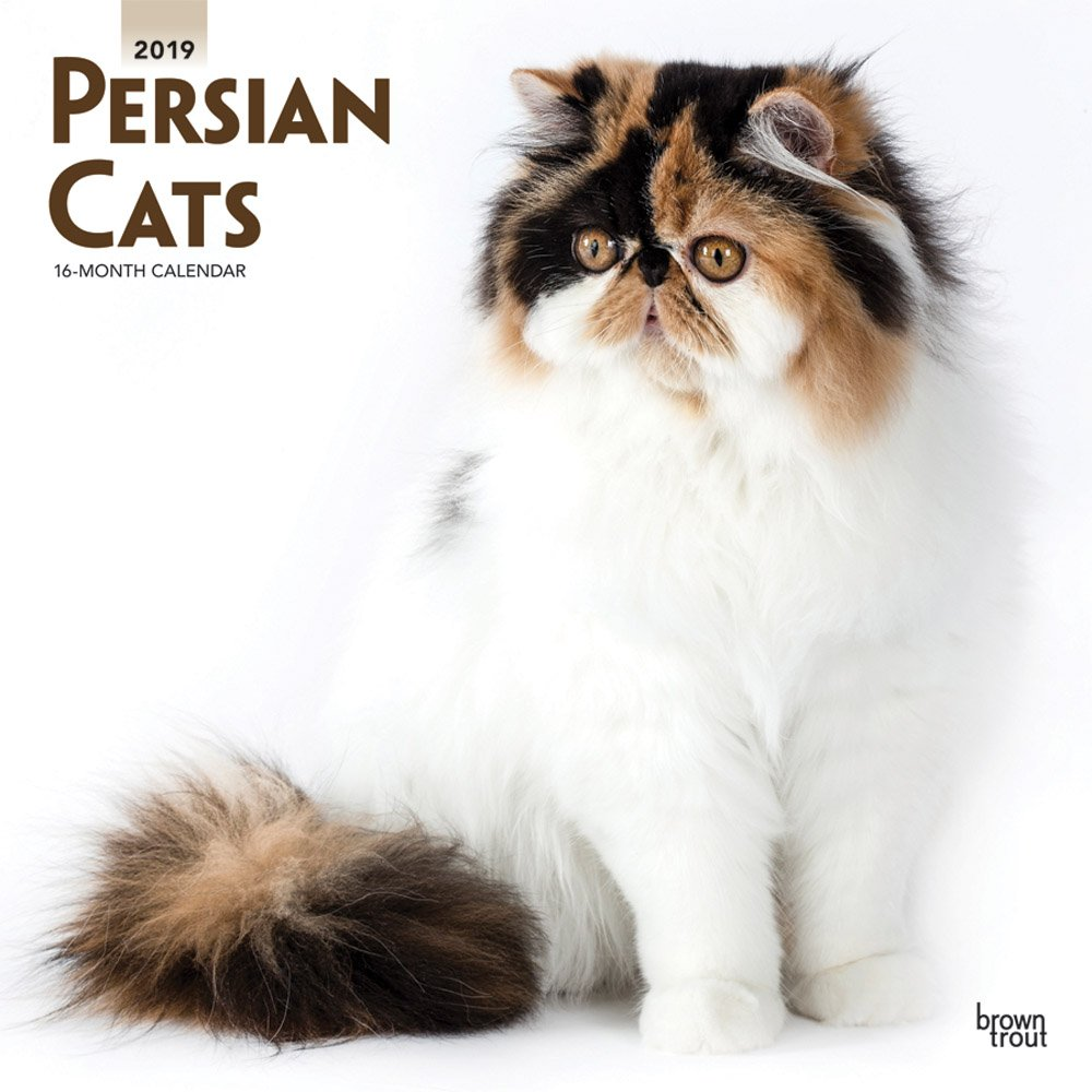 Persian Cats 2019 12 x 12 Inch Monthly Square Wall Calendar, Animals