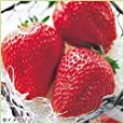 苺(イチゴ) アイベリーの苗(3苗セット)