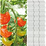 30x Tomatenspiralstab 180cm voll verzinkt Tomatenstab Tomaten Ranke Pflanzstab Stahl Profi Qualität ( 1-50 Stück ) Tomatenspiralstäbe