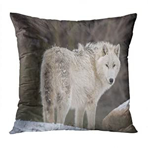 Moladika Throw Pillow Cover Square Arctic Wolf in The Snow British Columbia Canada Cushion Home Decor Living Room Bedroom Office Polyester Pillowcase 20 x 20 Inch