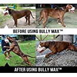 Bully Max Muscle Supplements for Dogs - Protein for Dogs to Build Muscle, Mass, Dog Weight Gain Supplement for Your Pitbull Puppy & Adult Dog - Dog Supplement for American Bully 11