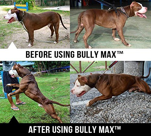 Bully Max Muscle Supplements for Dogs - Protein for Dogs to Build Muscle, Mass, Dog Weight Gain Supplement for Your Pitbull Puppy & Adult Dog - Dog Supplement for American Bully 4