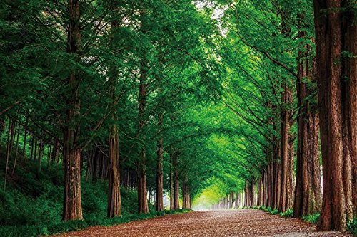 Nature Poster Canvas Art Print - Forest road trees landscape summer