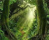 AOFOTO 10x8ft Magic Forest Background Dreamy Jungle Misty Nature Landscape Photography Backdrop Fairy Tale Hazy Paradise Fantasy Wonderland Blur Woods Path Green Trees Photo Studio Props Wallpaper