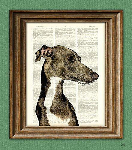 Italian Greyhound - Italian Greyhound dog beautifully upcycled vintage dictionary page book art print
