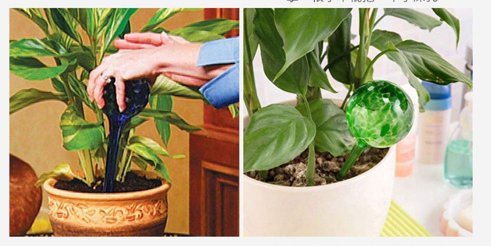 Lautechco 3pcs 200ml Water Ball Plant Automatic Watering Glass Bulbs Flower Drip Irrigation Tools (Random Color) by Lautechco® (Image #9)