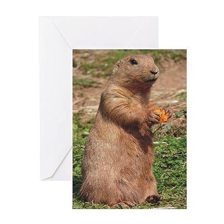 Amazon cafepress prairie dog 9x12 greeting card note card cafepress prairie dog 9x12 greeting card note card birthday card blank m4hsunfo