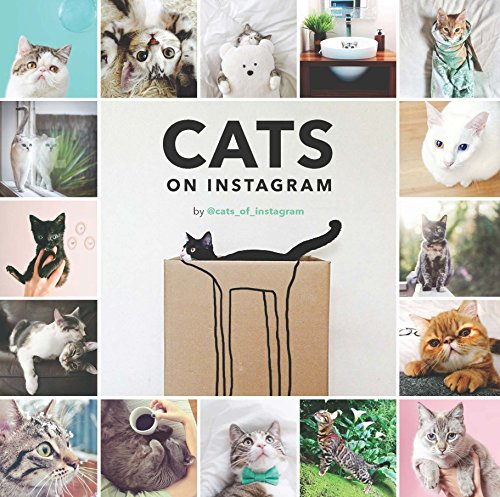 Cute Costume Ideas 2016 (Cats on Instagram)