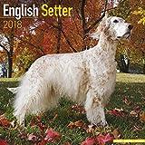 English Setter Calendar - Dog Breed Calendars - 2017 - 2018 wall Calendars - 16 Month by Avonside