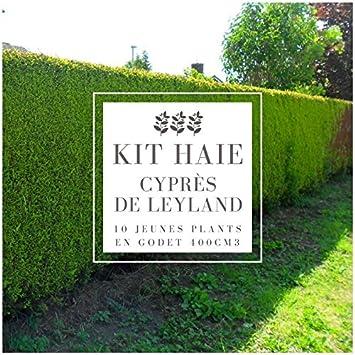 Haie En Kit cupressocyparis Leylandii Kit Haie Cyprès De ...