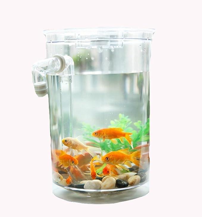 AN-LKYIQI Escritorio Mini creativo plástico pequeño LED Eco acuario pecera: Amazon.es: Deportes y aire libre