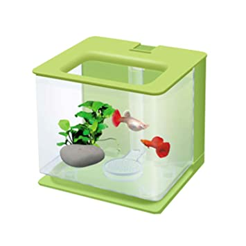 Pequeño Acuario Pecera De Agua Ecológica Creativa Creativa Mini Plástico De Escritorio Acuario Pequeño Autolimpiante Perezoso,Green: Amazon.es: Hogar