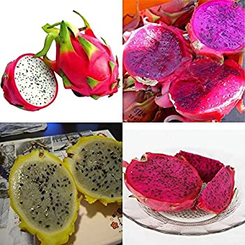 pear fruit what is dragon fruit