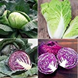 David's Garden Seeds Collection Set Cabbage SL657 (Multi) 4 Varieties 600 Seeds (Open Pollinated, Heirloom, Organic)