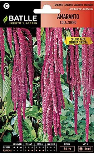 Semillas de Flores - Amarato cola de zorro - Batlle: Amazon.es: Jardín