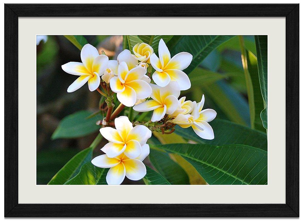 白、黄色のプルメリア 自然風景 壁掛け黒色木製フレーム装飾画 絵画 ポスター 壁画(40x60cm) B072KRC7SN