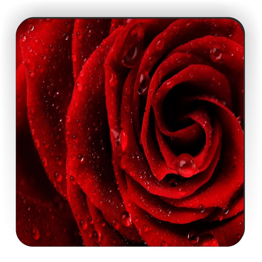 Rikki Knight Red Rose Close-up Design Square Fridge Magnet