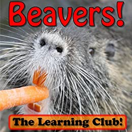 Beavers! Learn About Beavers And Learn To Read - The Learning Club! (45+ Photos of Beavers)