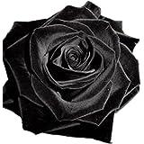 ESHOO 100 Samen Schwarzer Rosenstrauch Blumensamen