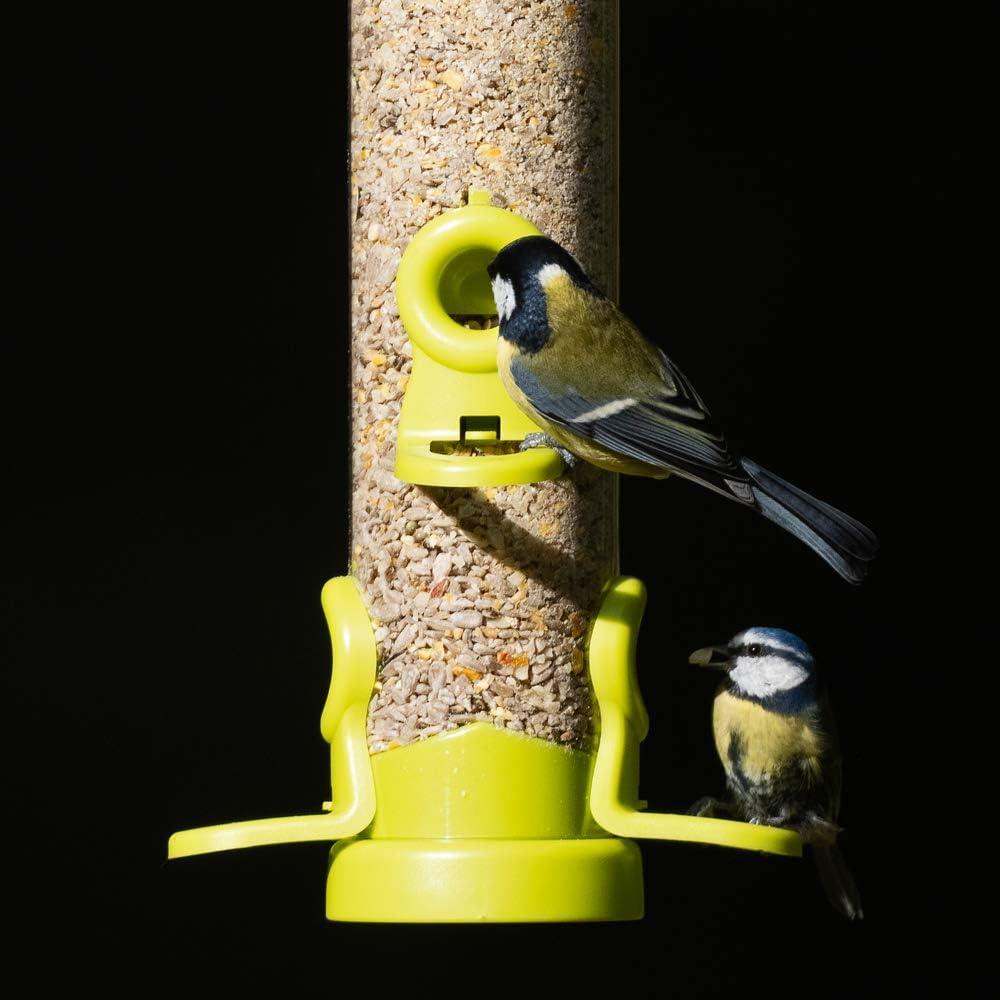 Verde Lima Jacobi Jayne semilla Scoop Alimentador del Pájaro