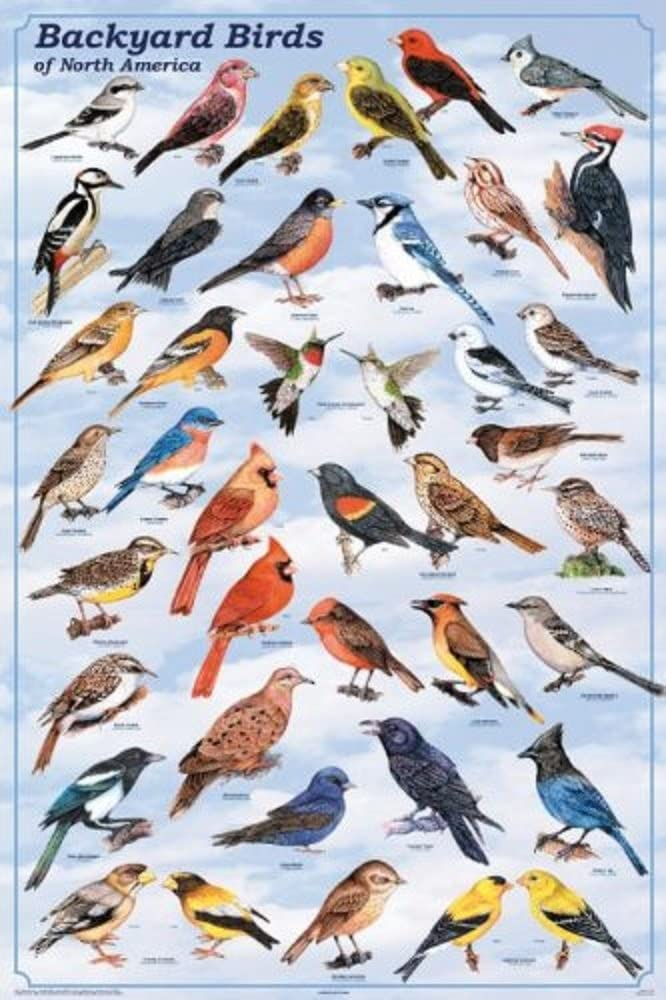 Picture Peddler Backyard Birds Laminated Educational Science Reference Chart Print Poster 24x36