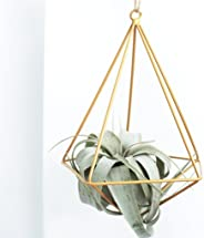 Air Plant Subscription Boxes - 1 Airplant/Month
