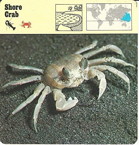 1975 Editions Rencontre, Animals Card, 21.498 Shore Crab