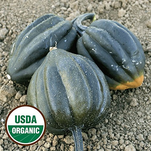 Everwilde Farms - 20 organic Table King Acorn Winter Squash Seeds - Gold Vault Packet ()