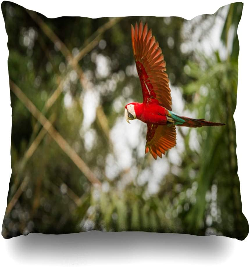 Ahawoso Throw Pillow Cover Pillowcase Square 20x20 Red Parrot Flight Macaw Flying Green in Animal Animals Wildlife Jungle Amazonian Blue Fauna Nature Decorative Cushion Case Home Decor Pillowslip
