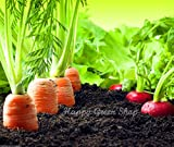 SEED TAPE BREAKFAST MIX 430 seeds 5.7m/8ft of Carrot Radish Lettuce 3 tapes