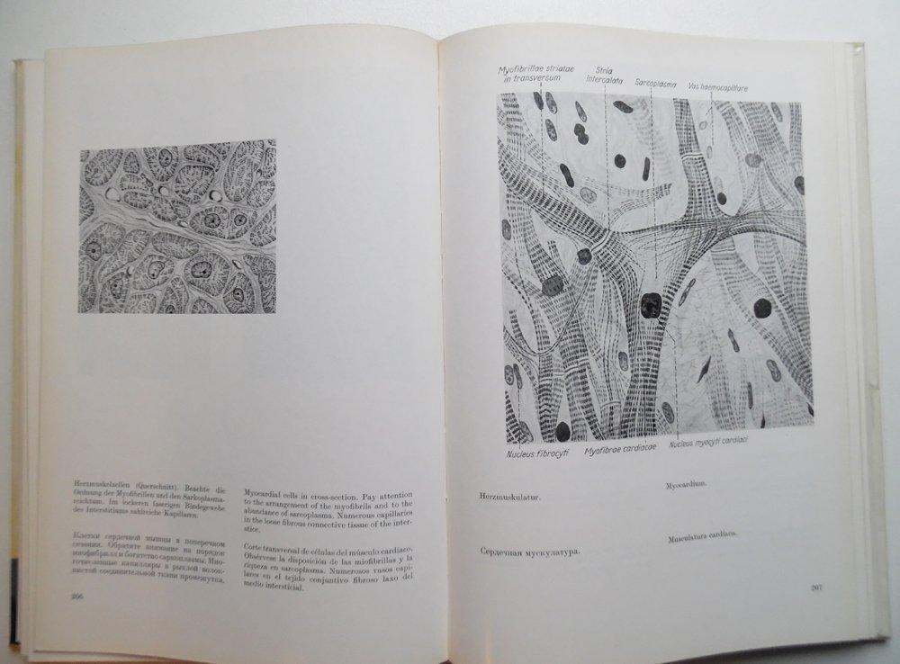Atlas der normalen mikroskopischen Anatomie des Menschen. Legenden ...