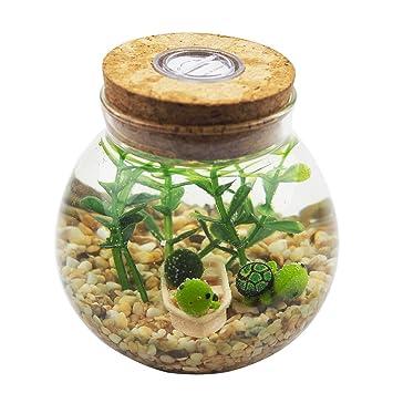 OMEM Juego de Acuario - Bolas de musgo estilo de vida, algas marinas, grava