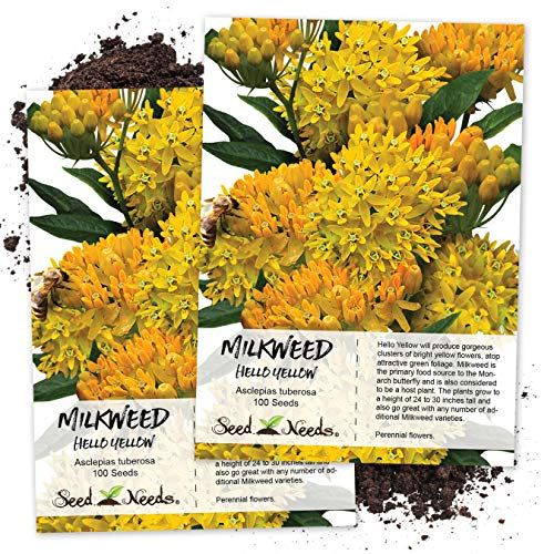 Seed Needs, Hello Yellow Milkweed (Asclepias tuberosa) Twin Pack of 100 Seeds Each