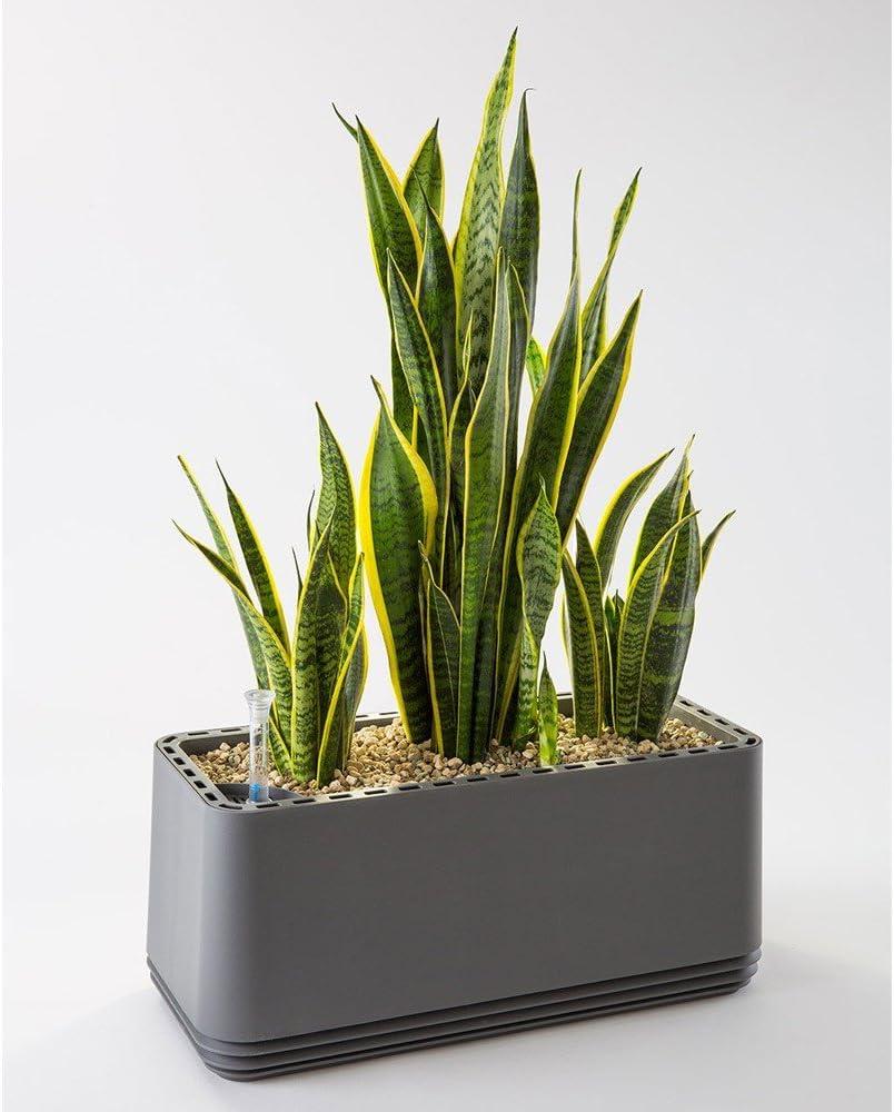 Pollen Nat/ürlicher Luftreiniger f/ür Allergiker AIRY Box Patentierter Pflanztopf als Filter gegen Schadstoffe Haus-Staub Geruch schwarz, Gen. 1 Allergie
