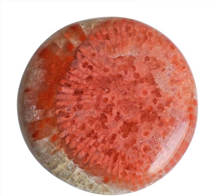 # 1AR 005 56.40 ct Natural Alaska Coral Cabochon Gemstone