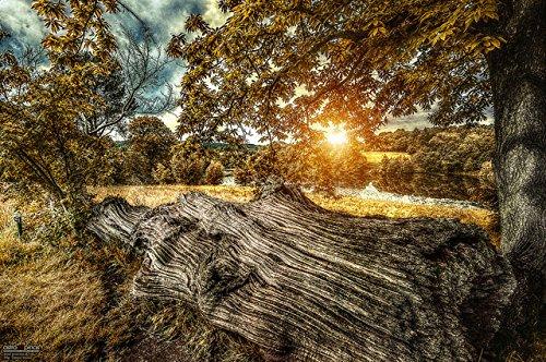 Dead Wood (Print - 24x36 in.) by