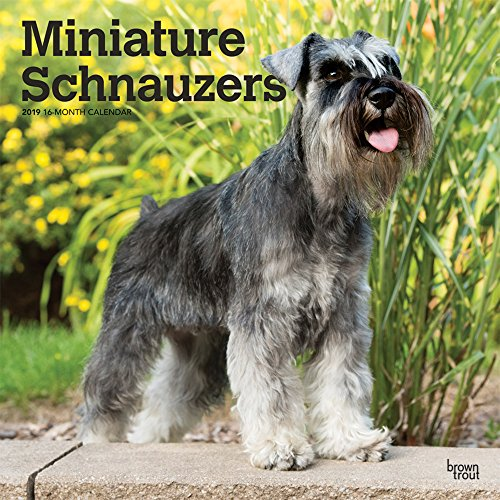Miniature Schnauzers 2019 12 x 12 Inch Monthly Square Wall Calendar, Animals Small Dog Breeds (Multilingual Edition)
