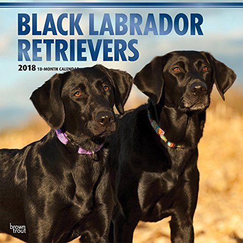 Black Labrador Retrievers 2018 12 x 12 Inch Monthly Square Wall Calendar with Foil Stamped Cover, Animals Dog Breeds Retriever (English, French and Spanish Edition) (Lab Animals)