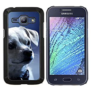 EJOOY---Cubierta de la caja de protección para la piel dura ** Samsung Galaxy J1 J100 ** --Chihuahua Puppy Dog Face Serio