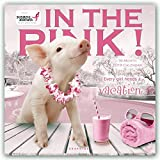Graphique Pretty in Pink Hangable Office Wall Calendar - 16-Month 2019 Calendar, 12''x12'' w/ 3 Languages, 4-Month Preview, Marked Holidays