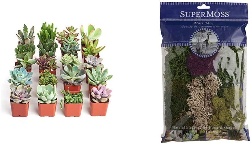 Shop Succulents Collection Assortment of Hand Selected, Fully Rooted Live Indoor Succulent Plants, 20-Pack & SuperMoss (23310) Moss Mix Preserved, 2oz (110 Cubic Inch)