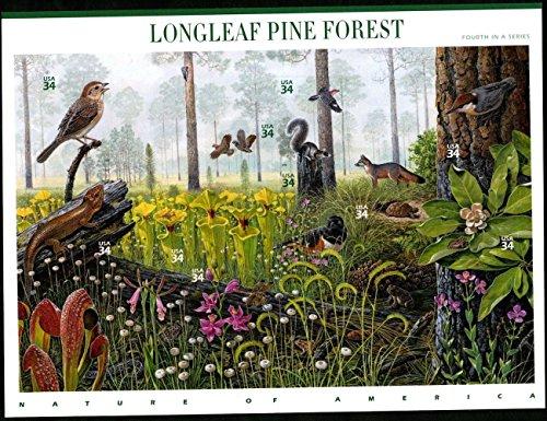 Usa Pine - 3
