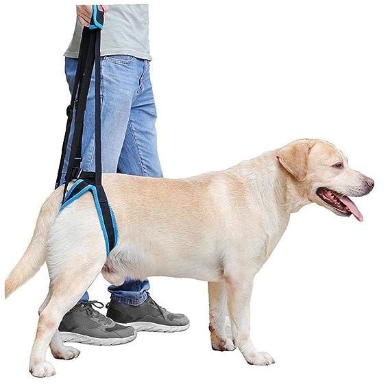 Arnés del perro con correa ajustable Rehabilitación elevación y ...