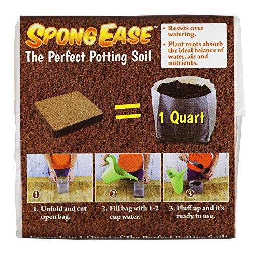 Potting Soil Seedlings - 4