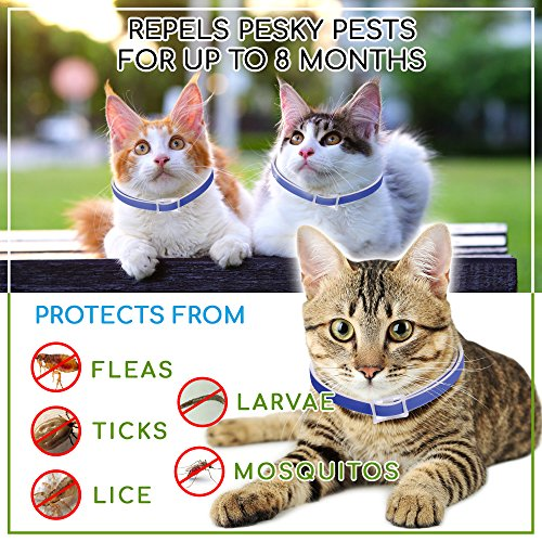 Waterproof-Flea-Tick-Collar-For-Cats-Kittens-Dogs-Pets-By-Frankie-Bee-Company-Powerful-Safe-Ingredients-For-All-Ages-Breeds-8-Month-Unique-Protective-Formula-For-Your-Cat