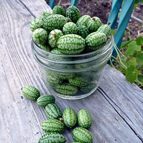 HOT HOT HOT 10pc Cucamelon Mini Watermelon Red Miniature Seeds