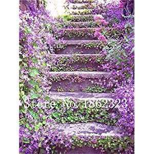 Bloom Green Co. 100 Pz rampicanti di gelsomino bonsai dei semi di fiore del gelsomino semina per la casa giardino di… 61cyuCO0Z2L. SS300